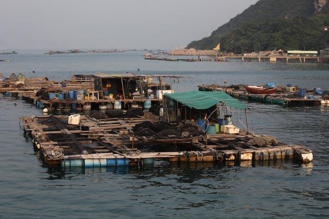 hong-kong-bateaux-photo-charles-guy-09